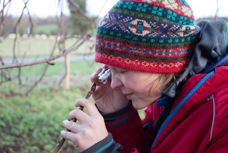 Person examining a bud using a magnifying eye glass