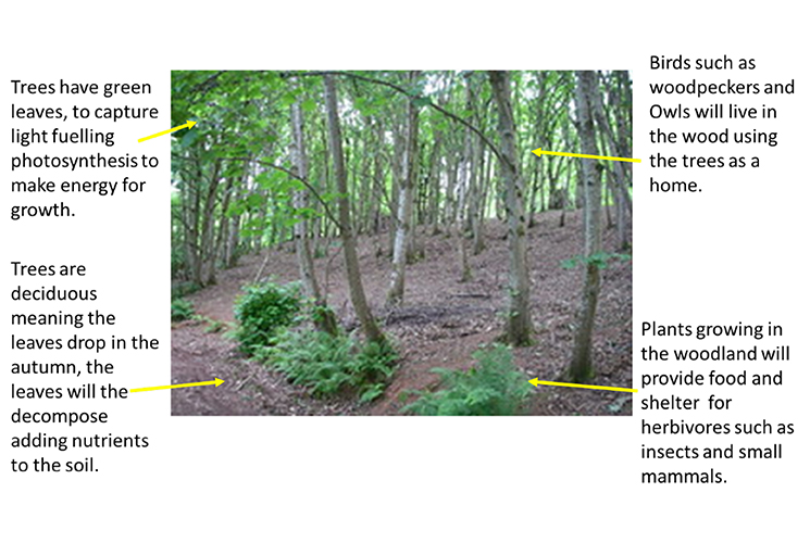Woodland image with description about the trees and wildlife