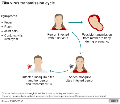 Zika-virus-transmission-cycle